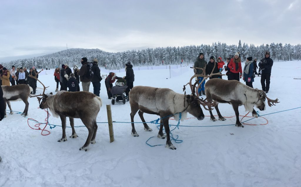 Learning how to learn from a traditional Sami reindeer herder
