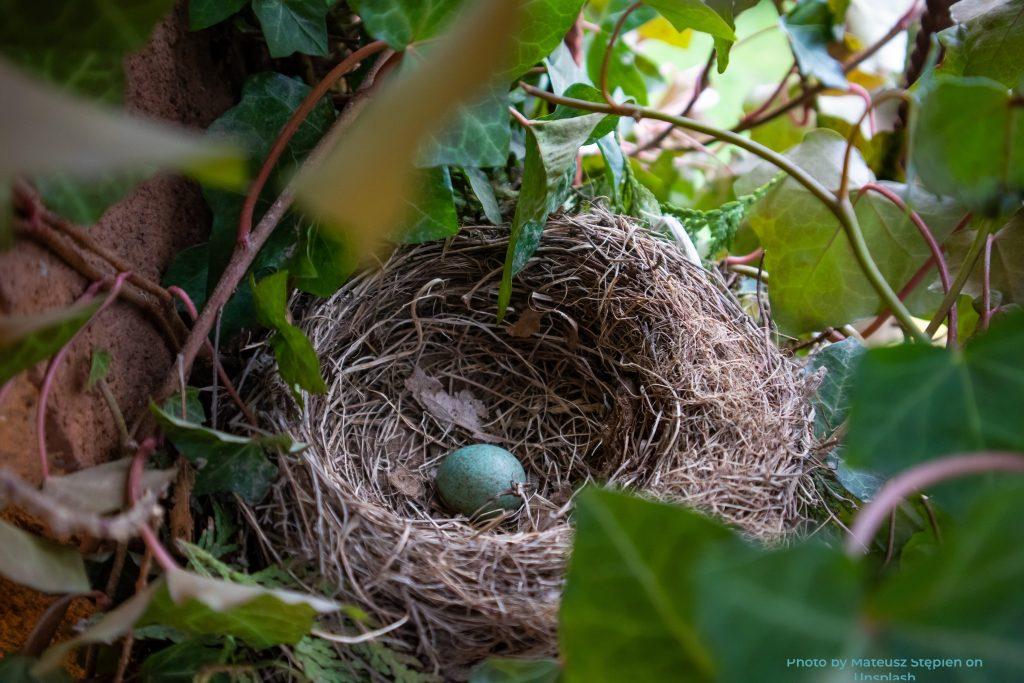 Refeather empty nest